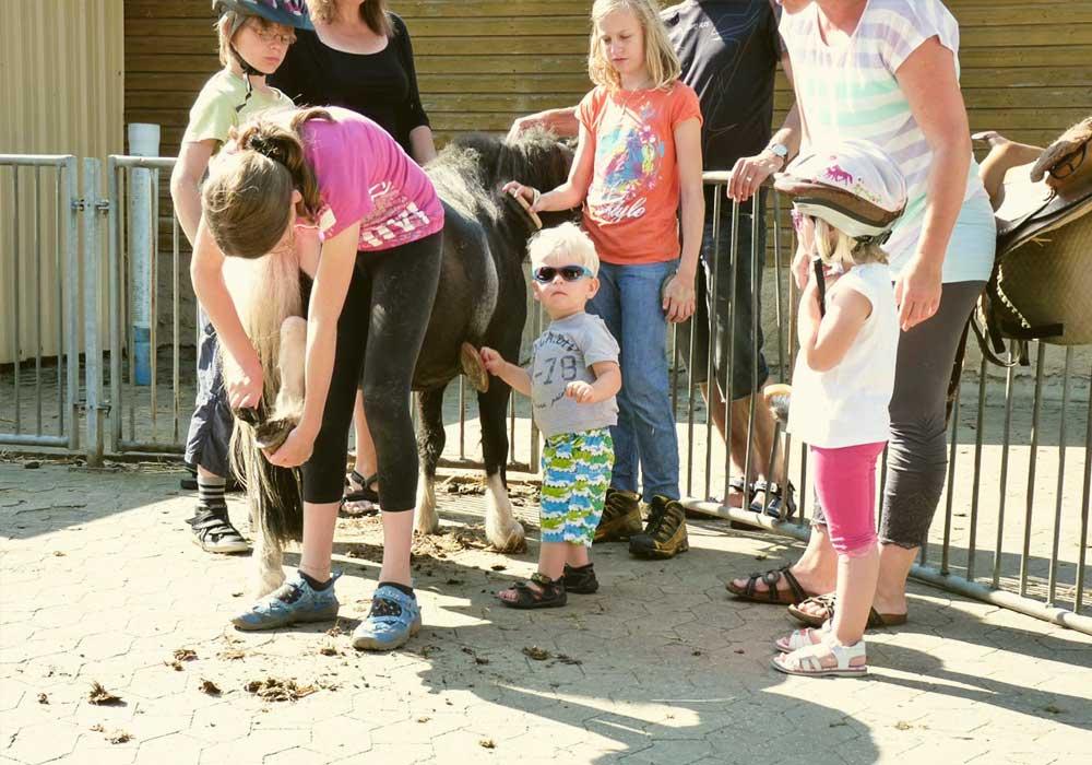 Ponys, Ferienhof Joas In Gerolfingen