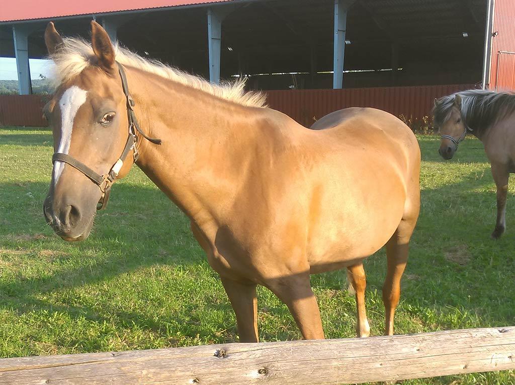 Ferienhof Joas, Pferde