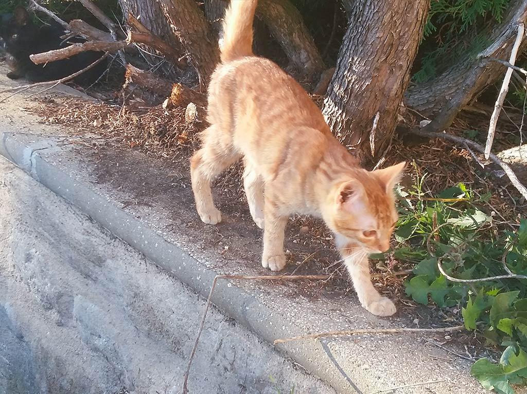 Ferienhof Joas, Katze beim Schleichen