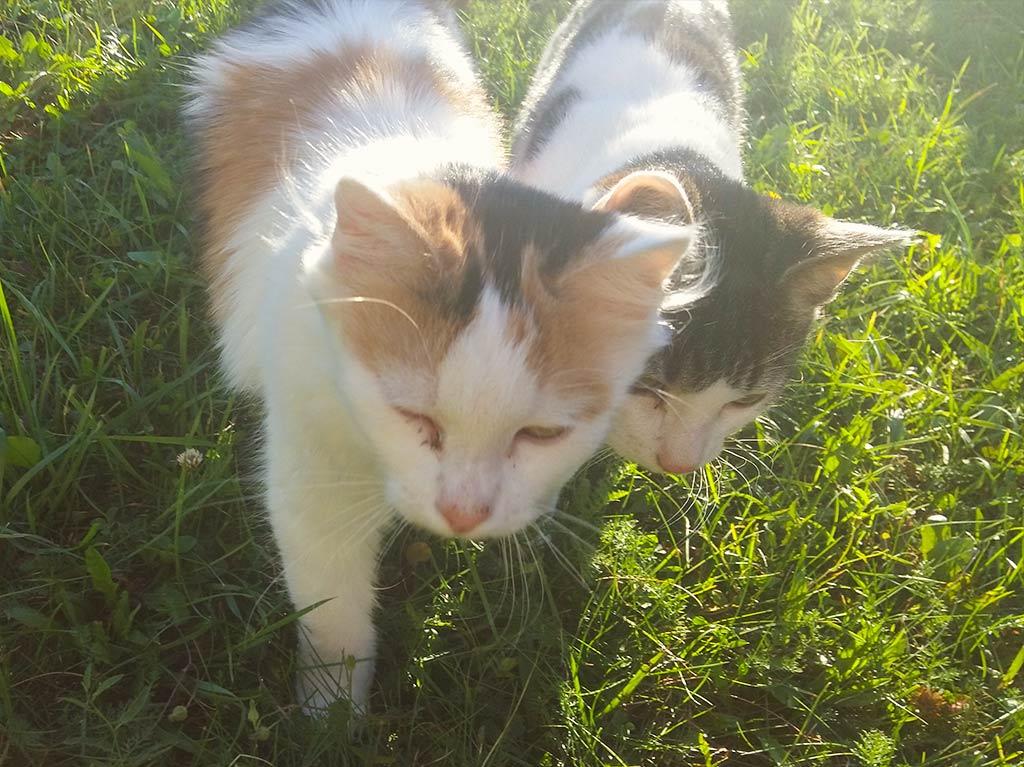 Ferienhof Joas, kleine Katzen