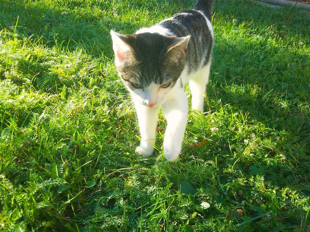 Unsere Tiere, Ferienhof Joas, Katze im Gras
