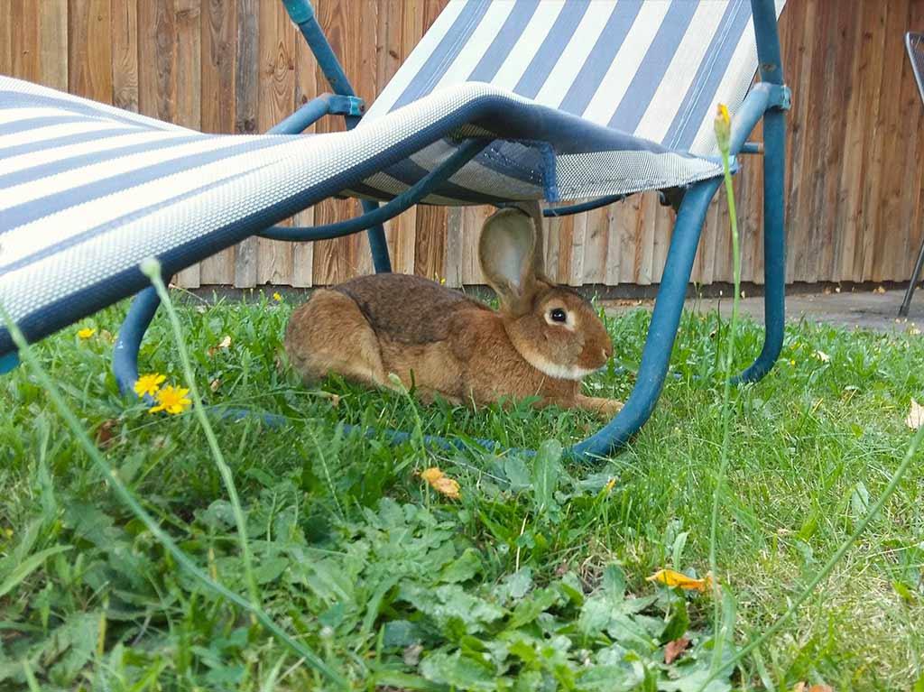 Unsere Tiere, Ferienhof Joas, Hase im Gras