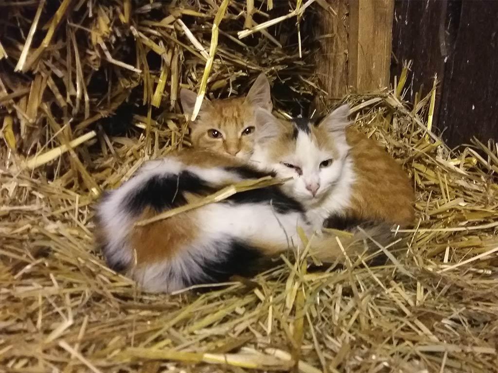 Ferienhof Joas, Kätzchen