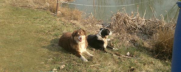 Bauernhof Joas in Gerolfingen, Hunde