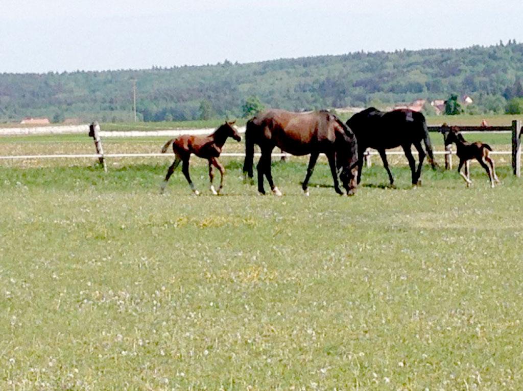 Unsere Tiere, Ferienhof Joas, Pferde