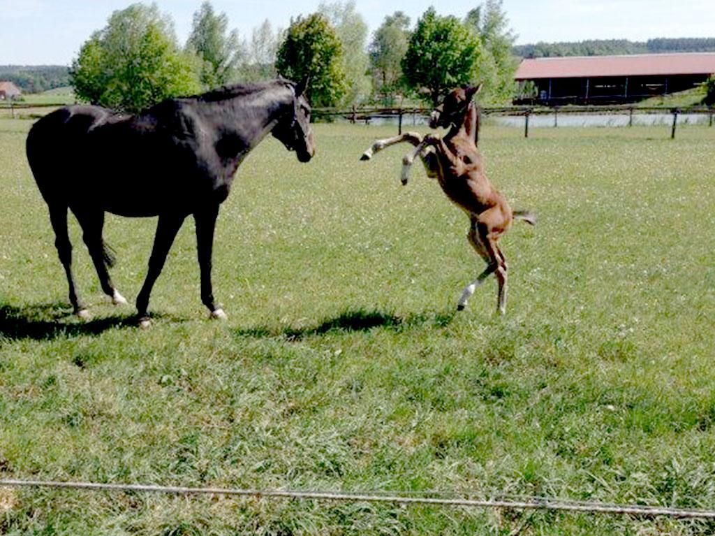 Unsere Tiere, Ferienhof Joas, Pferd mit Fohlen
