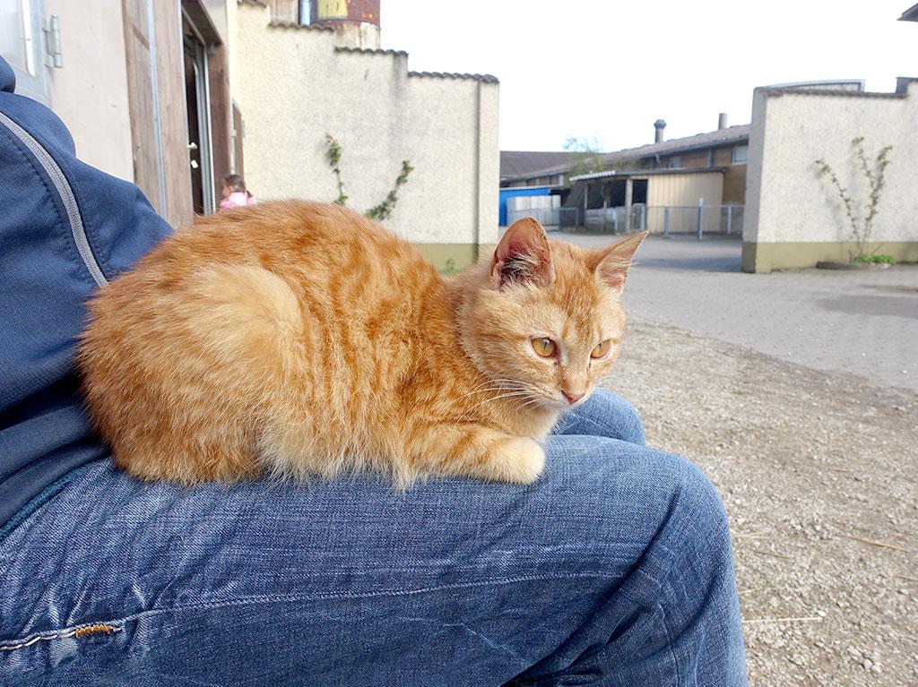 Unsere Tiere, Ferienhof Joas, Katze