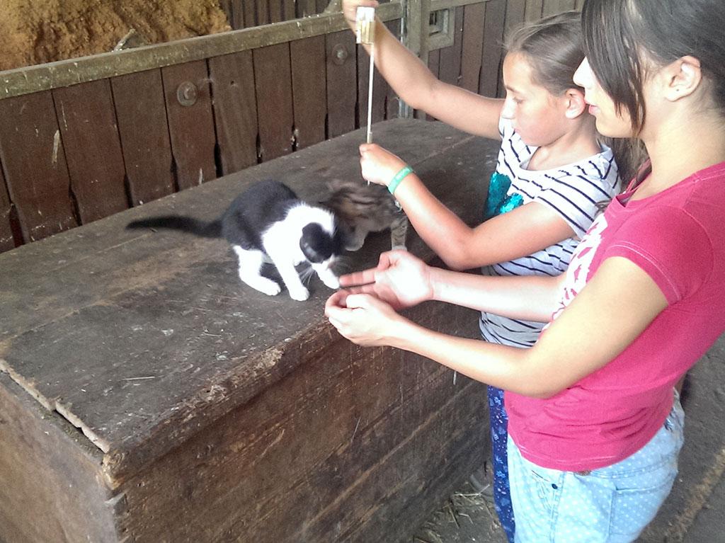 Ferienhof Joas, Katze