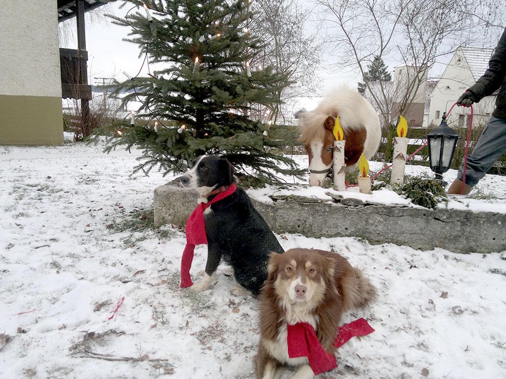 Ferienhof Joas, Hunde