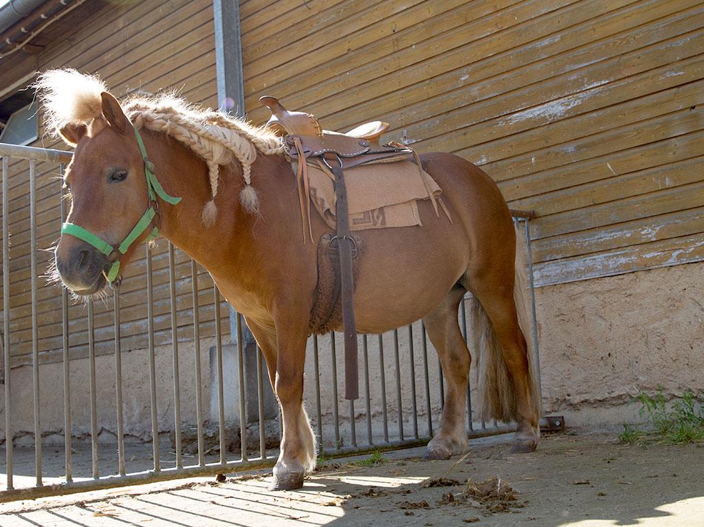 Ferienhof Joas, Pony mit Sattel