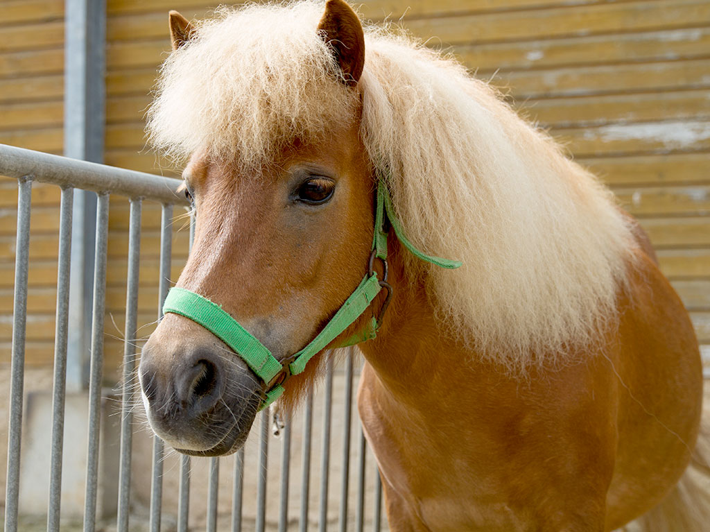 Ferienhof Joas, Pony am Zaun
