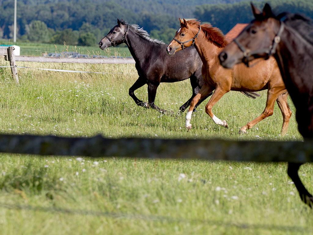 Unsere Tiere, Ferienhof Joas, Pferdekoppel