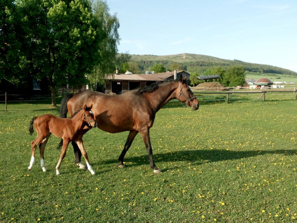 Unsere Tiere, Ferienhof Joas, Fohlen und Stute