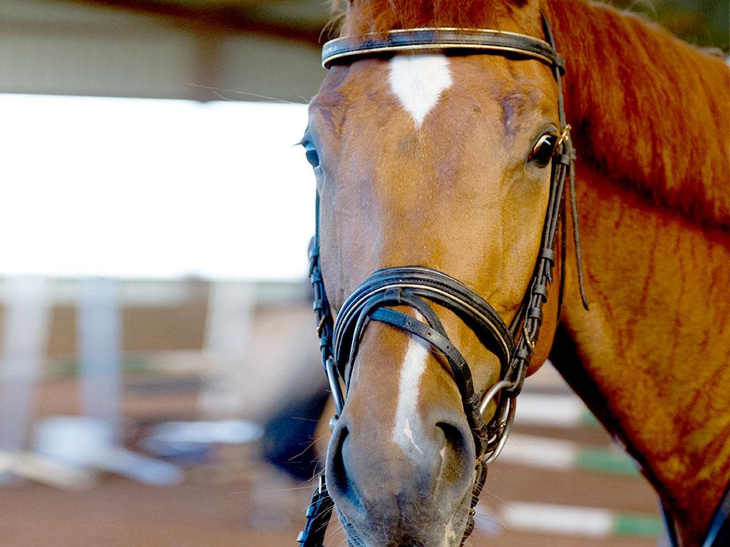 Ferienhof Joas, Pferd