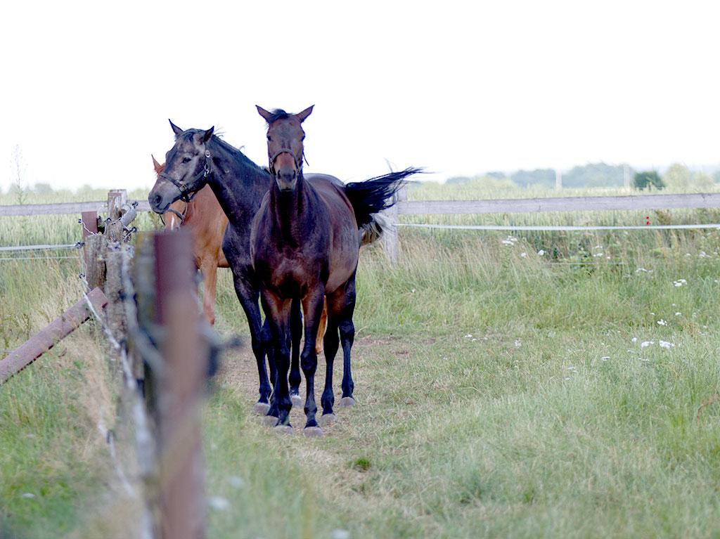 Ferienhof Joas, Pferde am Zaun